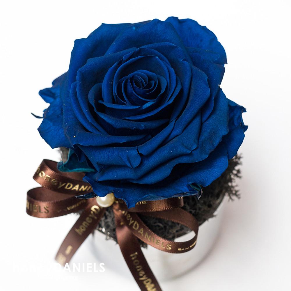 藍玫瑰恆星花