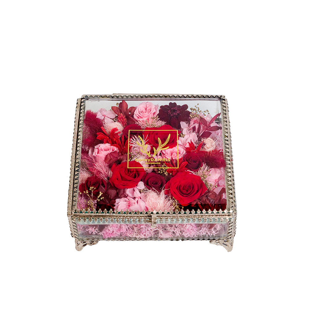珠寶盒恆星花-克珞里斯  Chloris