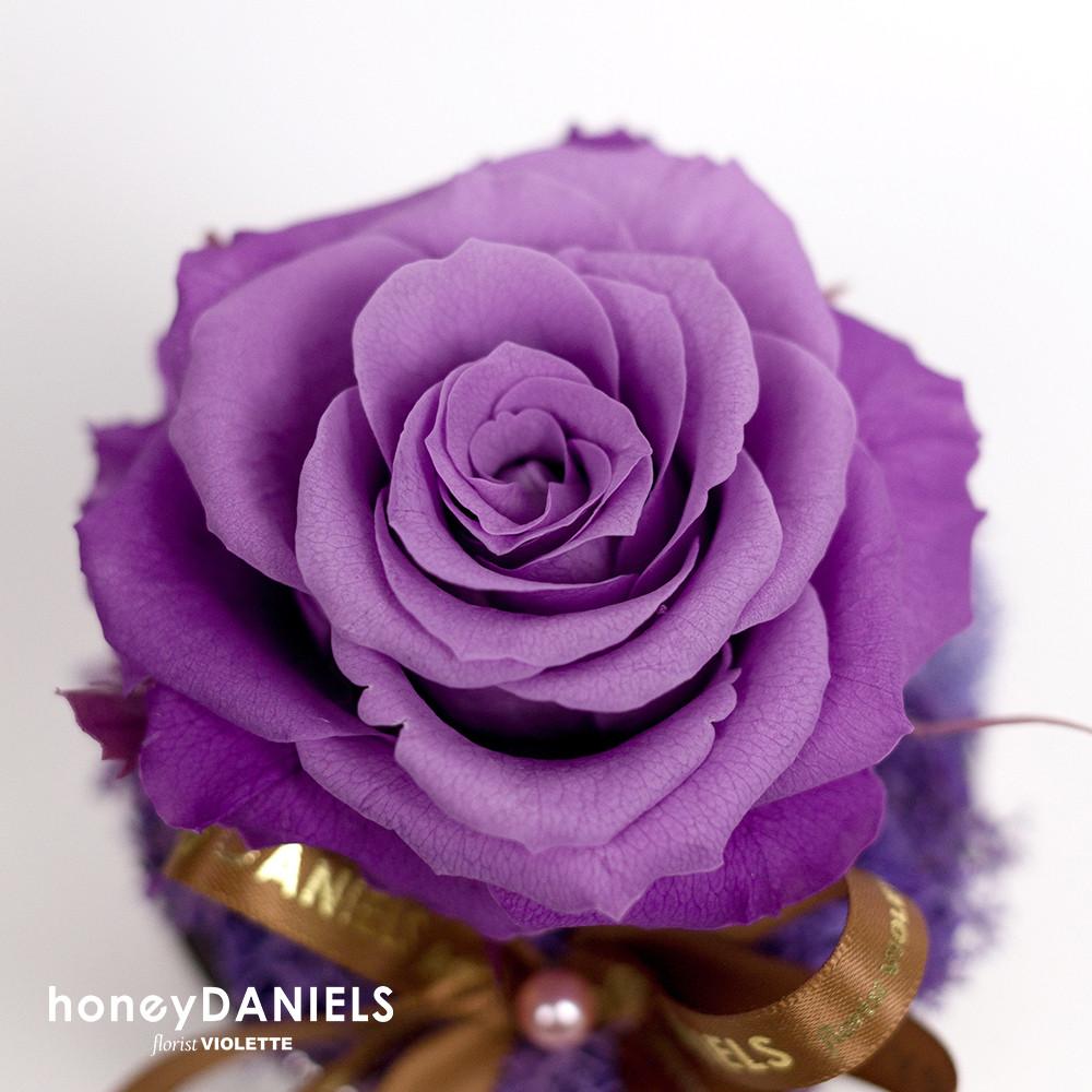 紫玫瑰恆星花