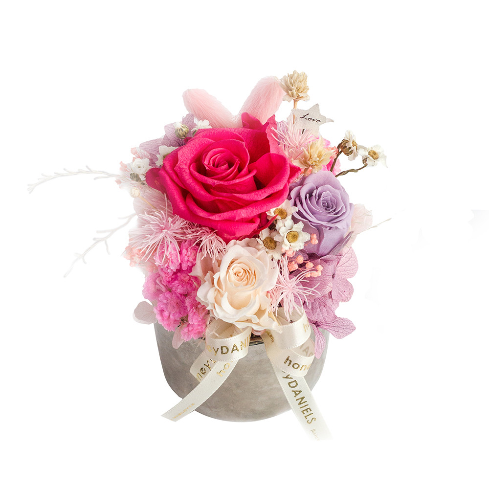 粉玫瑰恆星花