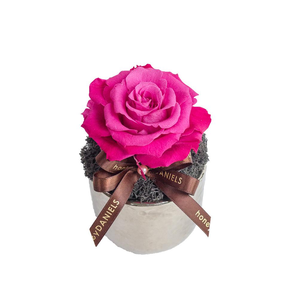 單朵粉玫瑰恆星花